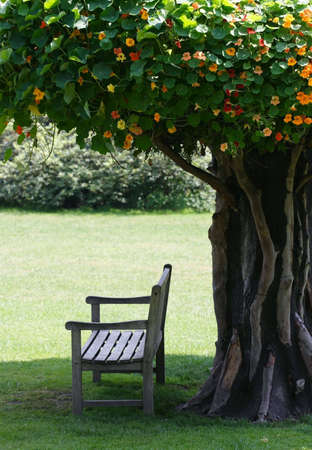 expectancy: The shadow. Alone seat stays in the shadow safe from the Sun under exotic tree full of creeper Stock Photo