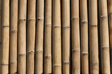 Bamboo wall Stock Photo - 464713