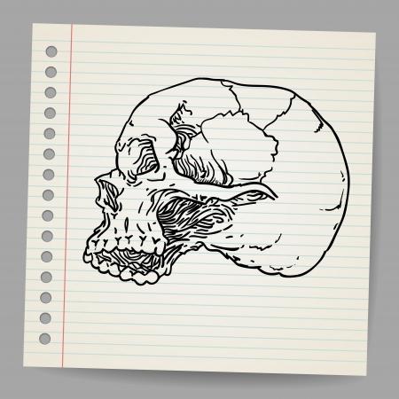 Doodle Skull Stock Vector - 18791157