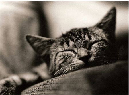 napping kitten in black and white