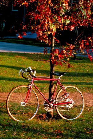 bicycle and colorful tree