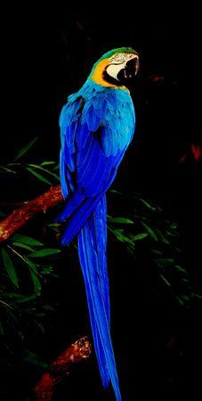 parrot Фото со стока