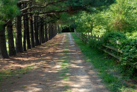 shady: tree lined country lane