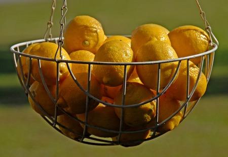 a basket of fresh lemons Zdjęcie Seryjne