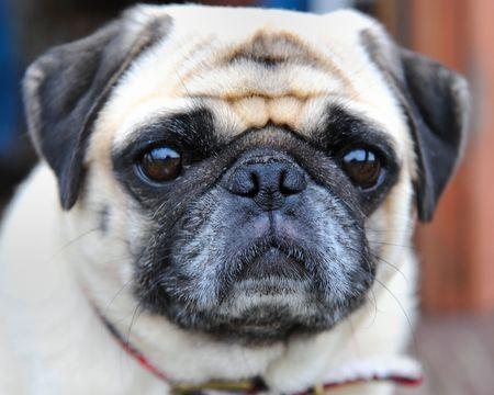 closeup of dog Reklamní fotografie