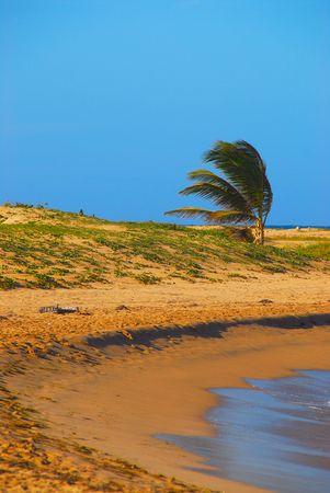 windswept: windswept beach
