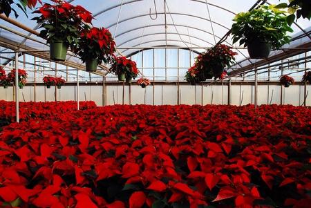 Greenhouse, November 26, 2010, Chester, Va