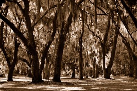 コケ覆われた木