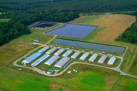 air view of modern hog farm and lagoons