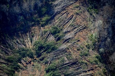 luchtfoto van houtkapactiviteiten
