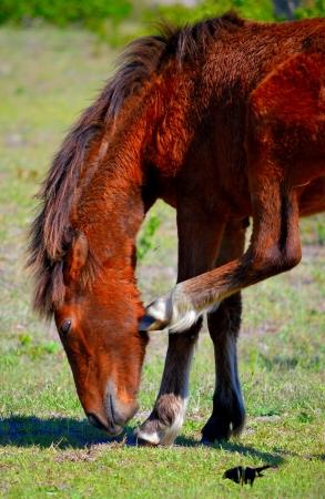 wild horse  Banco de Imagens