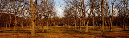 grove of pecan trees