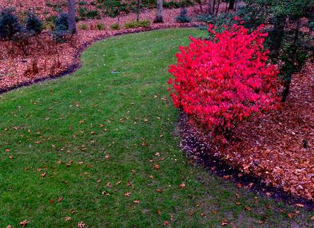 burning bush: garden path with red burning bush Stock Photo