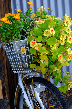 peddle: flowers in a bicycle basket