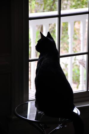 cat in window Фото со стока