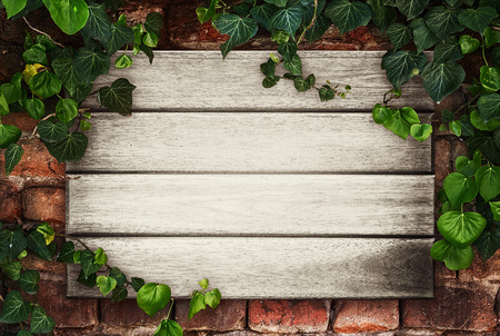 garden frame: Wooden boards framed by ivy -Place for your advertisement Stock Photo