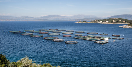 fish rearing: Fish breeding with tanks directly into the sea