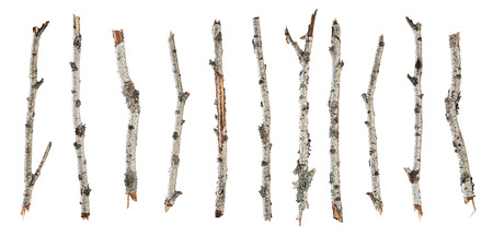Collection dry branches birch isolated on white background Imagens