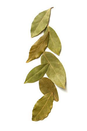 green top: Aromatic bay leaves on white background