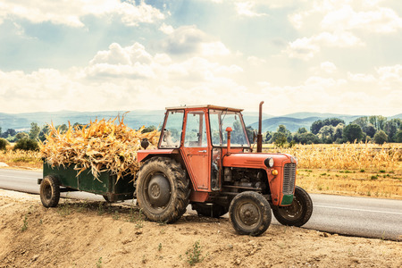 champ de mais: champ d'automne fonctionne -Tractor chargé de tiges sèches de maïs