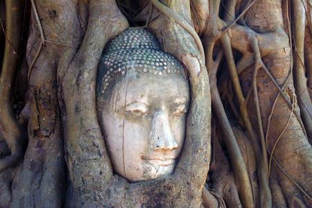 cabeza de buda: Buda, la cabeza