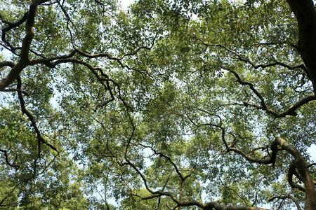 louver: Leaf