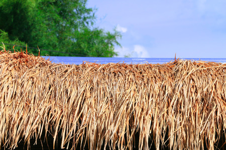 Grass roof under the sky background