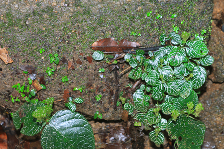 Fern on the rock in the forest