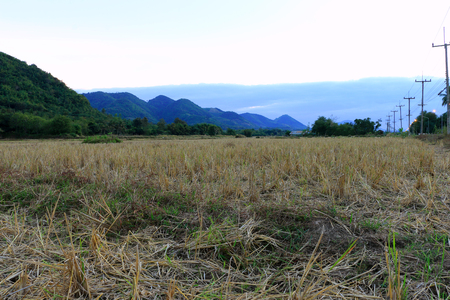 Straw rice field after harvest in front of the mountain on evening time