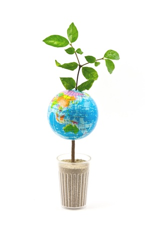 World map tree on white background photo