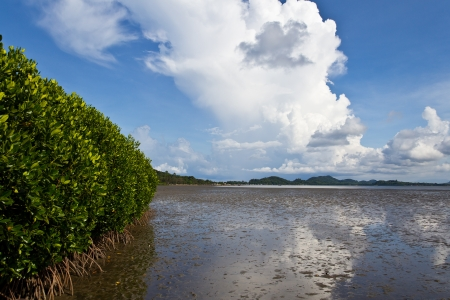 Mangrove forests in Thailand. photo