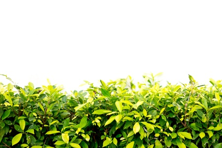 Green leaf tree background wall photo
