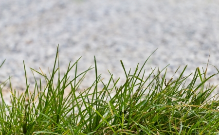 disordered: abstract background of grass blur stone background with grass edges  Stock Photo