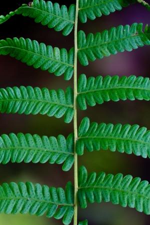 serrated: Fern green serrated leaves