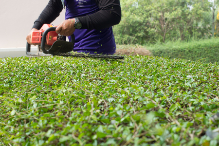 blade of grass: Workers were using mower for Gardening.