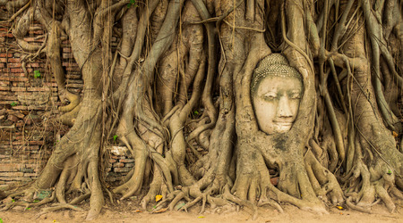 Ancient Buddha head in the tree roots. Ayutthaya, Thailand photo