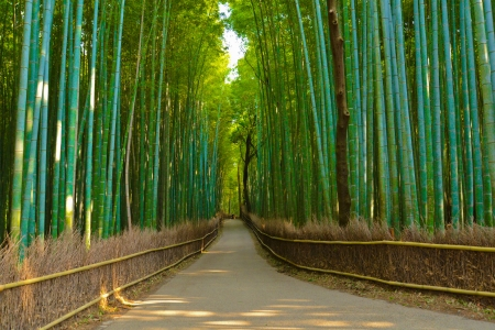 green bamboo: Bamboo forest