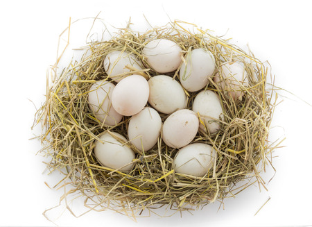 dozen: dozen duck eggs in nest isolate on white background Stock Photo