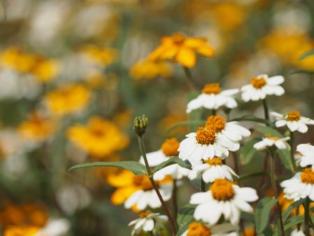 ramo de flores: Flores blancas con flores blancas y amarillas mezcladas borrosas Foto de archivo