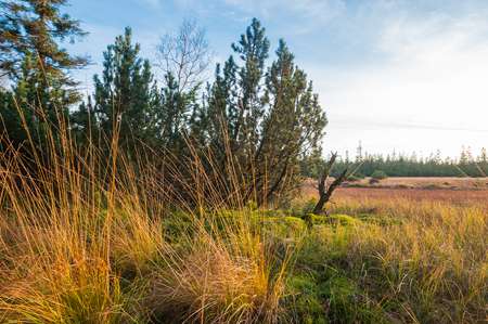 black moor: Nature reserve big Hohlohsee, Reichental Kaltenbronn, Black Forest, Baden-Wurttemberg, Germany, Europe