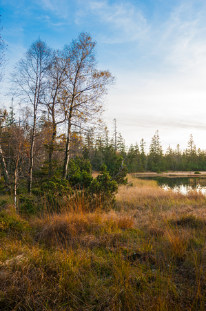 autumnally: Nature reserve big Hohlohsee, Reichental Kaltenbronn, Black Forest, Baden-Wurttemberg, Germany, Europe