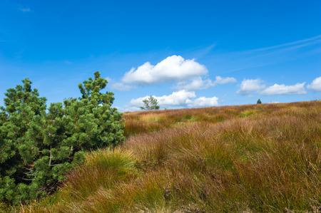 black moor: The typical moor landscape on the Hornisgrinde, Seebach, Black Forest, Baden-Wurttemberg, Germany, Europe Stock Photo