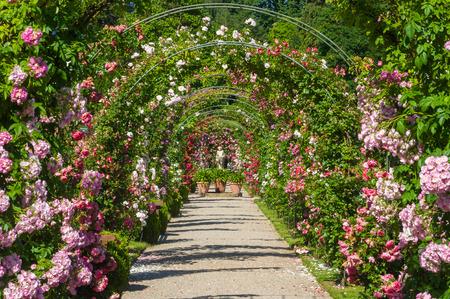 ローズ ガーデン Beutig、シュヴァルツヴァルト、バーデン = ヴュルテンベルク州、ドイツ、ヨーロッパでバラのアーチと神々 の像