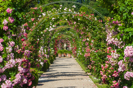 ornamental garden: Rose Arches and gods statue in the Rose Garden Beutig, Black Forest, Baden-Wurttemberg, Germany, Europe Stock Photo