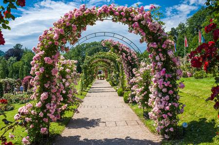 rosas negras: El jard�n de rosas Beutig en Baden-Baden, Selva Negro, Baden-Wurttemberg, Alemania, Europa