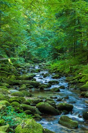 The Grobbach brook in Geroldsau, Black Forest, Baden-Wuerttemberg, Germany, Europe