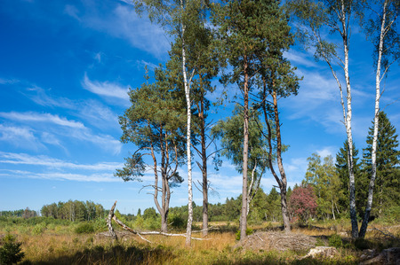 black moor: The Schwenninger moss, origin of the river Neckar in Villingen-Schwenningen, Black Forest, Baden-Wurttemberg, Germany, Europe Stock Photo