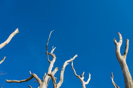 deadwood: Standing deadwood on the Battertrocks in Baden-Baden, Black Forest, Baden-Wurttemberg, Germany, Europe