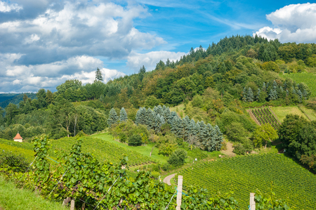 black forest: Vineyards and landscape in Gengenbach, Black Forest, Baden-Wuerttemberg, Germany, Europe