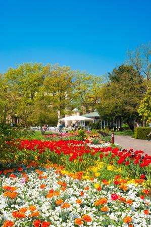 tulipan: Park miejski w Ettlingen, Niemcy, Schwarzwald, Badenia-Wirtembergia, w Niemczech, Europie
